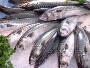 lecker-makrelen